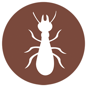 Les différents diagnostics  Termites / Mérules